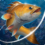 Fishing Hook v2.4.0 (Mod – Unlimited Money)