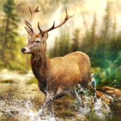 Hunting Clash: Hunter Games - Shooting Simulator icon
