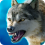 The Wolf v1.8.1 (Mod)